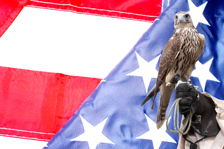 handlers: Falcon on handlers hand on US flag background