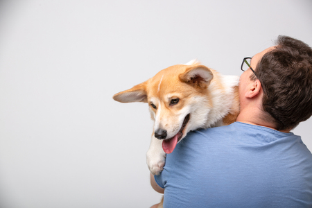 Veterinarian doctor hold havy corgi dog puppy, back view.