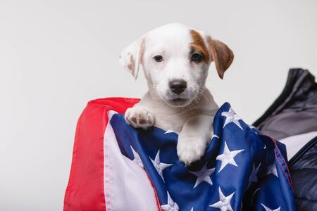 Small white puppy with US flag on background