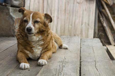 dog waiting: Old dog waiting for his master to work. Stock Photo