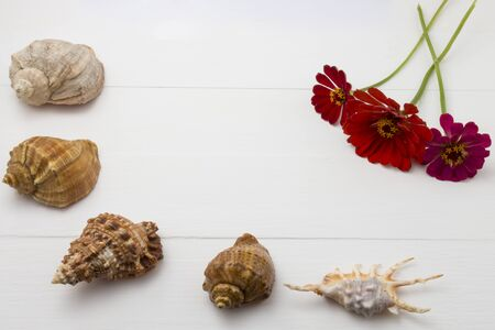 Seashells on white reminiscent of holidays and parties.