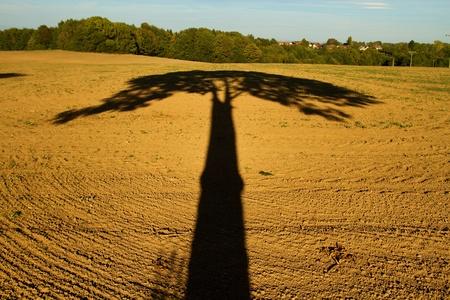 to shade: shade tree