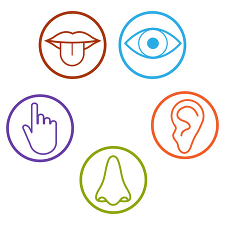 Human senses icon. Vector illustration flat