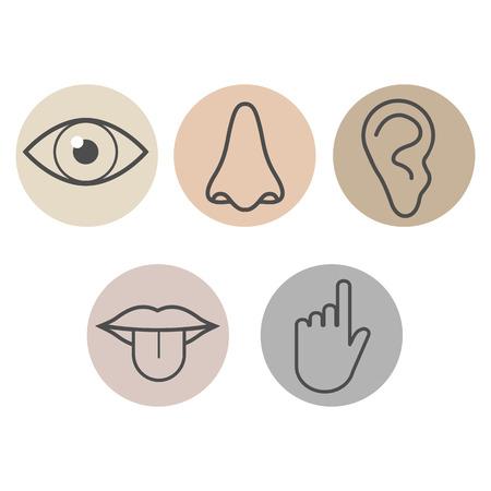 Icona dei sensi umani. Illustrazione vettoriale piatta