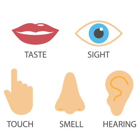 Icona dei sensi umani. Illustrazione vettoriale piatta Vettoriali