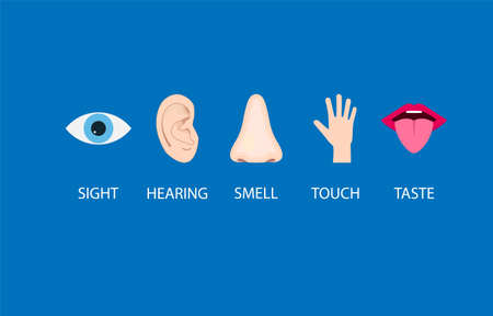 Human senses icon. Vector illustration,