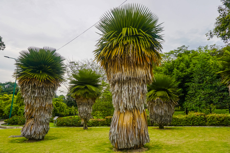 Beautiful trees in Kuala Lumpur park. Malaysia Stock fotó
