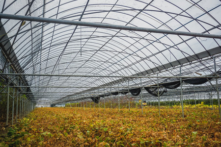 Plantation of plants in a greenhouse in South Korea Imagens