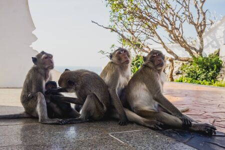 Monkeys in the temple on the mountain in the city of Prachuap Khiri Khan in Thailand 版權商用圖片