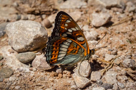 Beautiful butterfly on the land close up