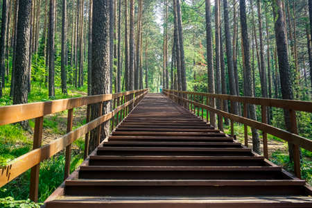 Wooden staircase in the forest of the Krasnoyarsk Pillars Reserve