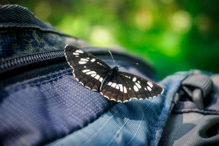 Beautiful butterfly sits on a backpack