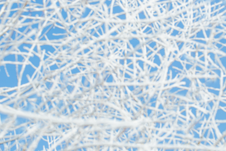 sopel lodu: Birch branches frozen in snow on the blue sky background