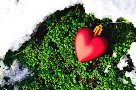 thee: Valentines Day concept. Toy heart laying in the thaw spring moss at forest.