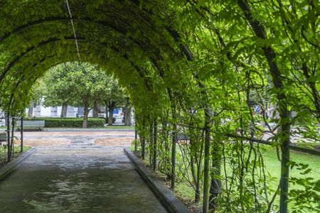 Arched green natural tunnel from plant branches with green leaves in the park. Life shadow on a hot sunny day