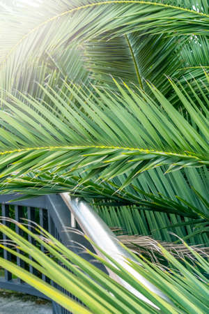 palm leaves green background close up
