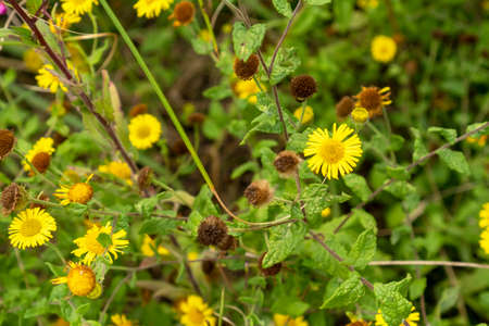 Small yellow flowers with green foliage and stems close up