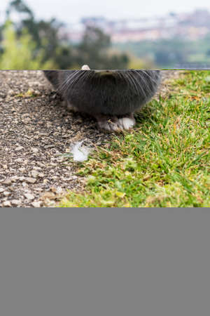 Portrait of a frightened gray sad rabbit close-up on the asphalt sidewalk on the background of nature and trees in blur