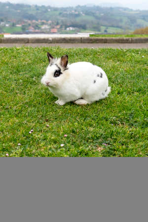 White rabbit on fresh green grass in the park against the background of city buildings in blur