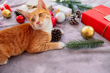 Cute orange kitten look up on carpet in christmas holiday with decoration and ornament. Domestic cute cat in winter and sunlight warm.