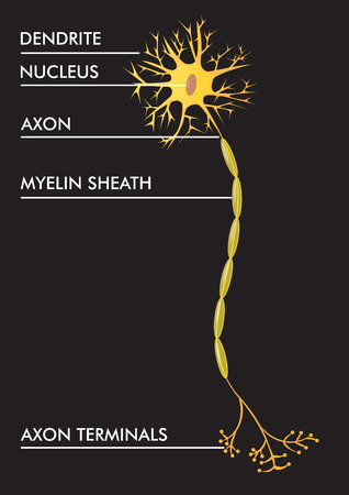 vector illustration of neuron scheme with description