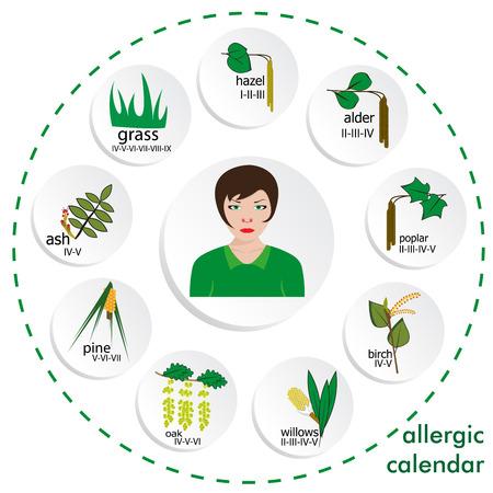 alder: calendar of  allergy seasons. separated on white background.vector format