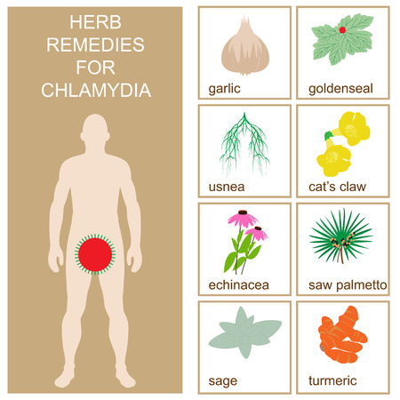 chlamydia herbal remedies. vector format illustration.