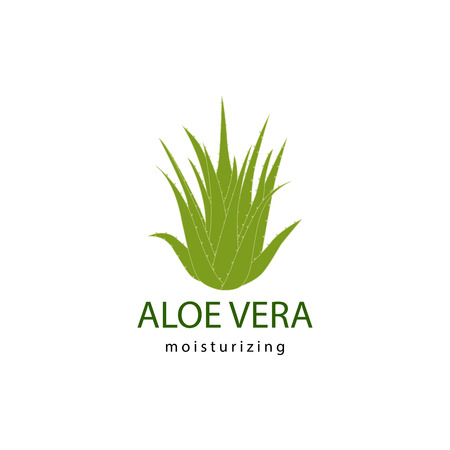 vector illustration of green aloe vera plant