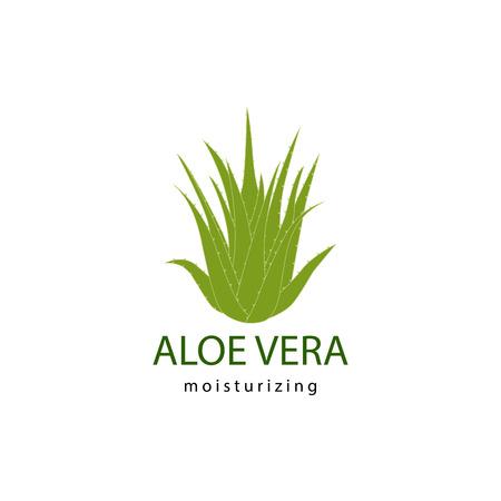 aloe vera plant: vector illustration of green aloe vera plant