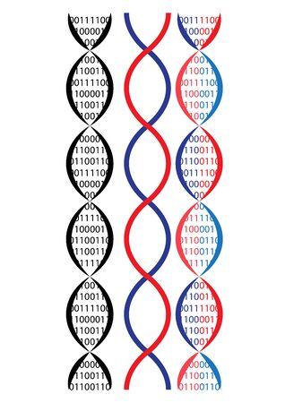 rna: vector illustration of the bottom chaim binary idea.