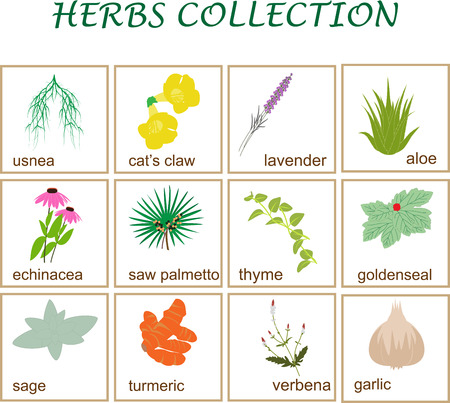 vector illustration of a popular herbs collection.