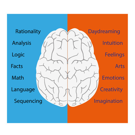 left right: vector illustration of a brain left and right sides