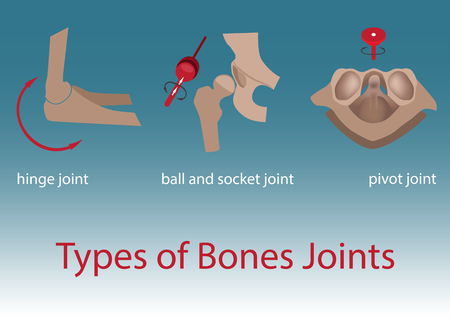 hinge joint: vector illustration. types of human bones joints anatomy.