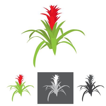 gray scale: agave plant with flower vector illustration with bonus gray scale illustrations