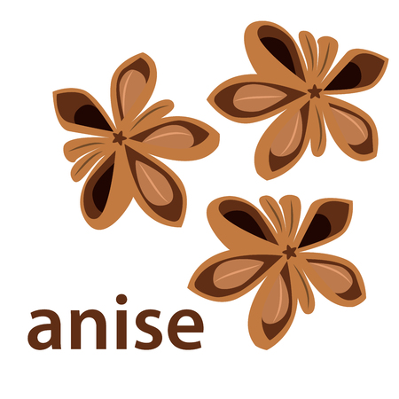 anise: Vector illustration of star anise Illustration