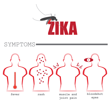 infected mosquito: zika virus most common symptoms. vector format infographic illustration