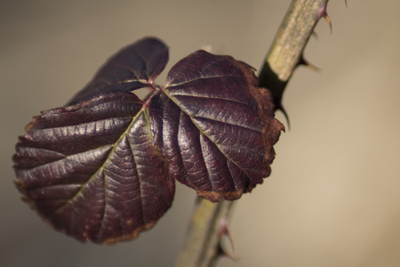 leaf of young wild close-up in early spring