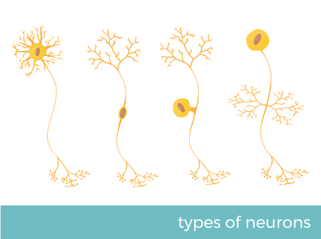 Types of neurons - part of humans central nervous system. Vector format illustration.