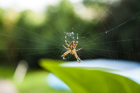 Photography of a spider in the wild on spiders web. 写真素材