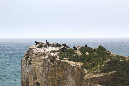 A herd of cormorants on a rock protruding from the ocean