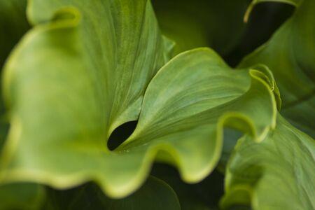 Close up of green leaf.
