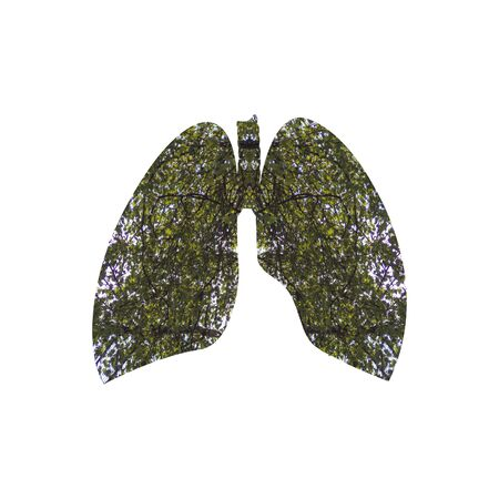 Branches with green leaves inscribed in the shape of the lungs.