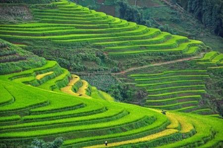 gradas: Terrazas del arroz en Sapa, Vietnam