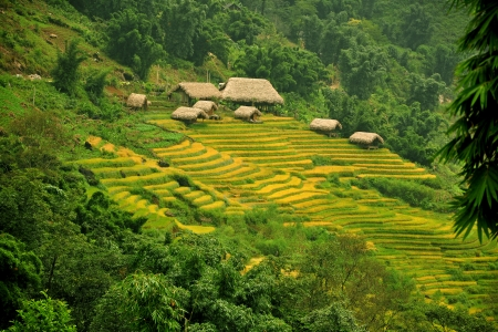 RICE TERRACES AND COTTAGE IN SAPA, VIETNAM  Stockfoto