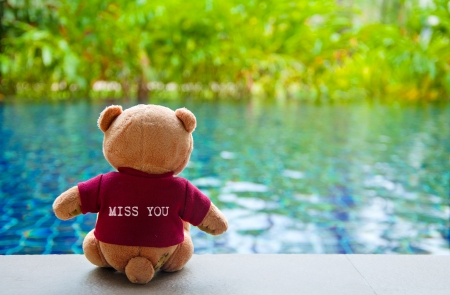 Back view of Teddy Bear wearing red T-Shirt with text  MISS YOU   Teddy Bear Sitting near Swimming Pool