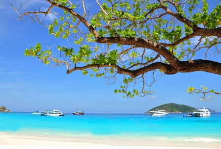 Beautiful beach with blue sea and branch from tree on Similan island, THAILAND