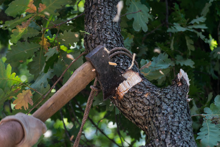 A man dynamic cutting a tree log tied with a rope with an ax hatchet wearing white gloves