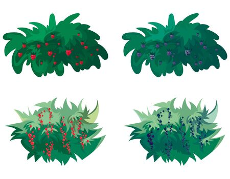 Set of berry bushes. Raspberry, blackberry, red and black currant.