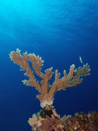 hard: Hard coral