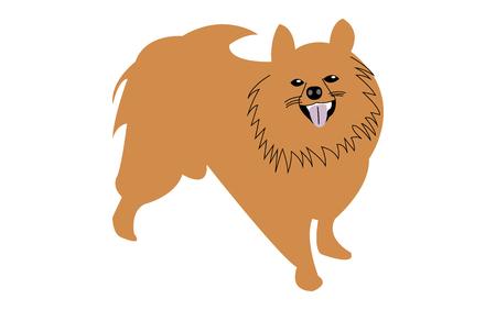 Cute pomeranian dog cartoon illustration Vettoriali